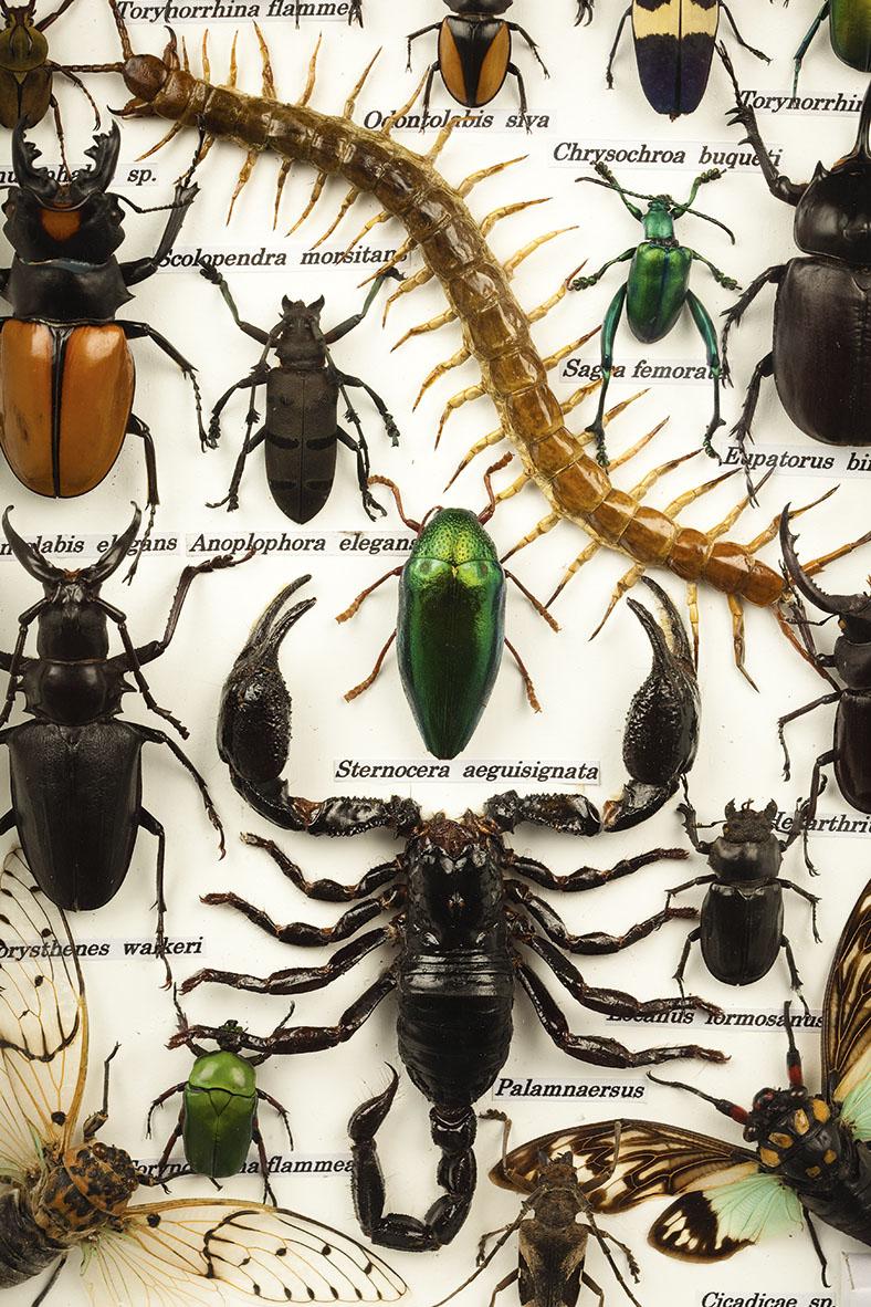 Diese Abbildung zeigt einen Ausschnitt von verschiedenen präparierten Käferarten.