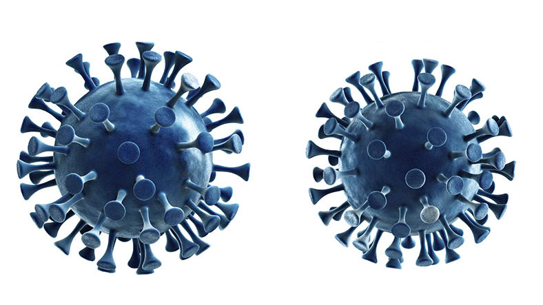 3-D-Darstellung von zwei Coronavirus-Zellen in blauer Farbe vor weißem Hintergrund