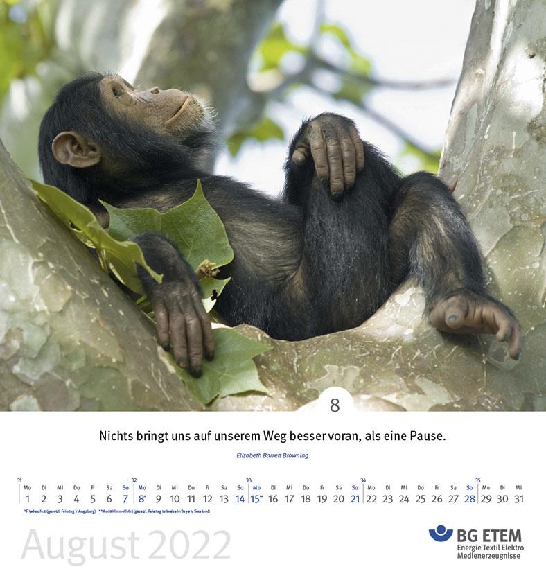 BG ETEM Kalenderblatt August 2022 mit Motiv Schimpanse in einer Astgabel liegend.
